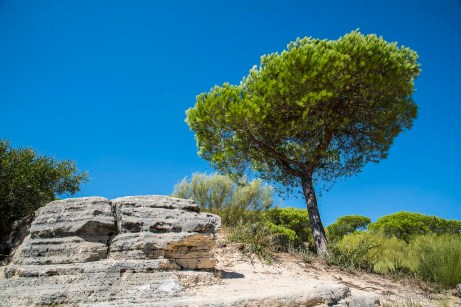 "A nice little walk above the cliffs in the park at Barbate. Nikon D810 24 mm (24-120 mm ƒ/4) 1/160"" ƒ/8 ISO 64"