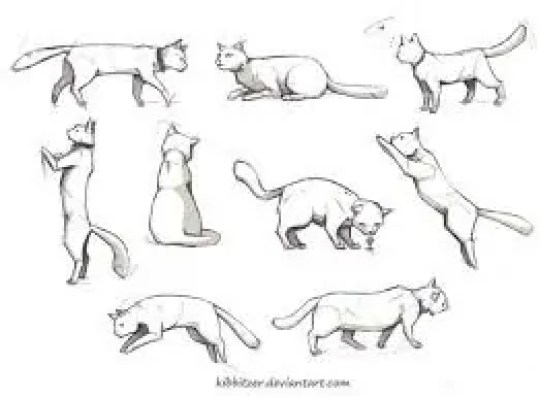 референс кошки
