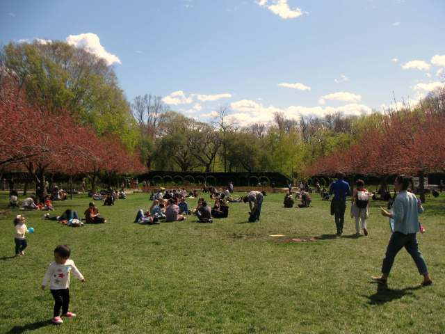 Cherry Esplanade at the Brooklyn Botanic Garden