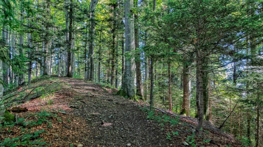 Schöne Waldpartie