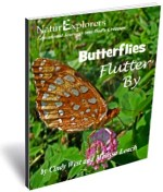 Butterflies Flutter By 3D Cover
