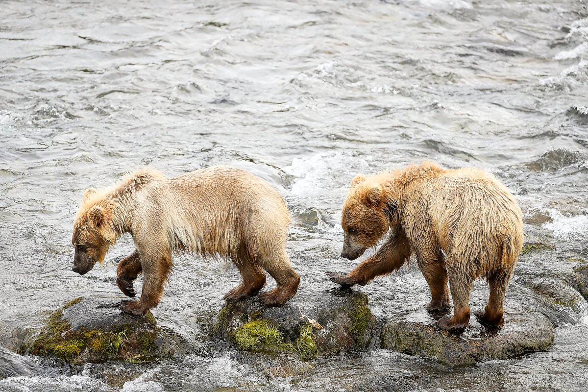 Exploring bear country - Katmai National Park