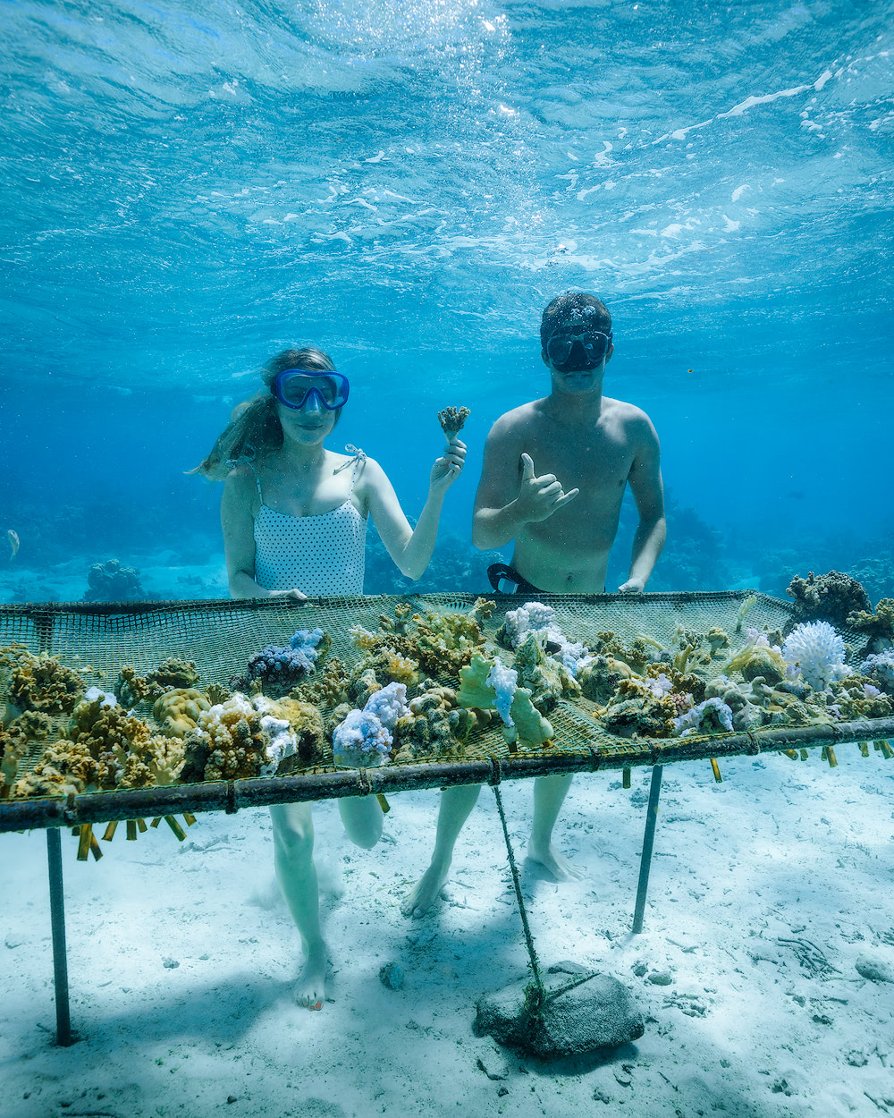The Islands of Tahiti Moorea Coral Gardeners 1