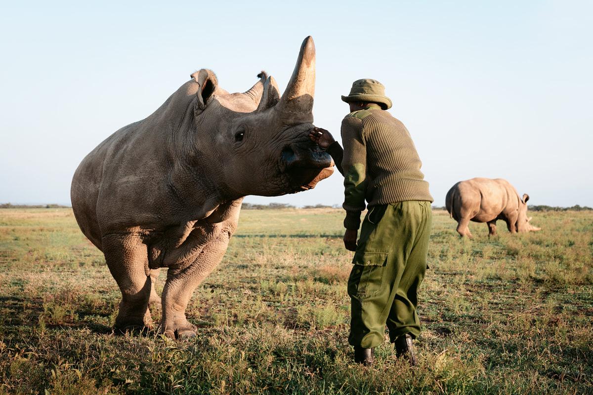 Ultimate Safari Adventure at Ol Pejeta Conservancy Kenya Horse Northern White Rhino Enclosure