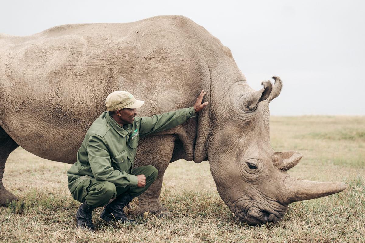 Ultimate Safari Adventure at Ol Pejeta Conservancy Kenya Northern White Rhino Enclosure Ranger