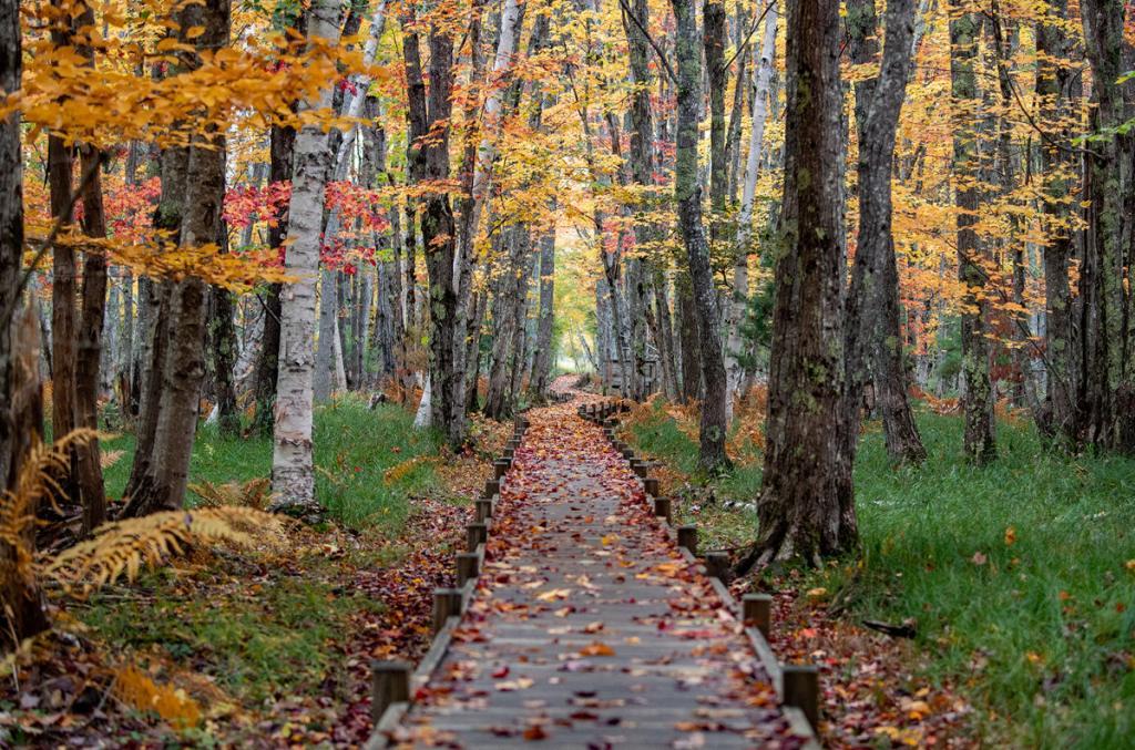Acadia National Park Hiking Trail