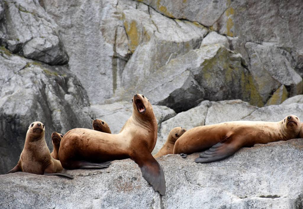 The Ultimate Guide to Exploring Kenai Fjords National Park - Seals spotted on a boat tour