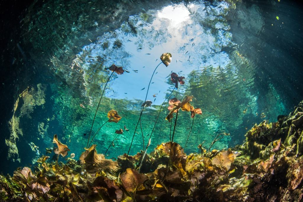 8 Best Cenotes Near Tulum Mexico - Cenote Nicte-Ha
