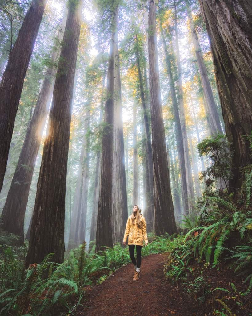 Best National Parks to Visit in Spring - Redwood National & State Parks