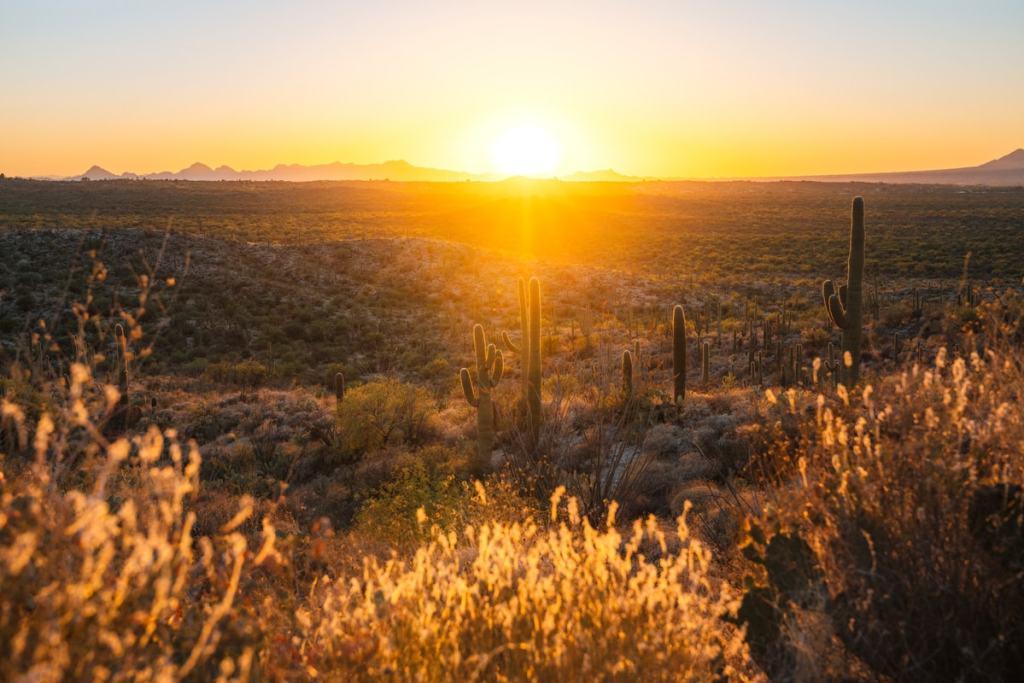 Best National Parks to Visit in Spring - Saguaro National Park