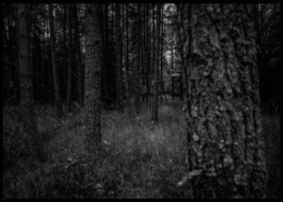 dark-forest-4