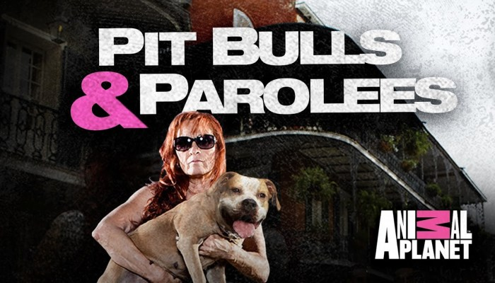 When Does Pit Bulls & Parolees Season 8 Start? Release Date