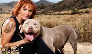 Pit Bulls & Parolees Season 10 On Animal Planet: Cancelled or Renewed? (Release Date)