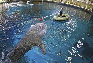 Animal Planet Releases Premiere Date for The Aquarium