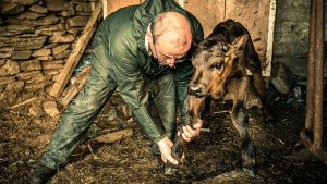 Mountain Vets renewed for series 2