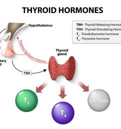 how thyroid hormones interact [ 4371 x 3822 Pixel ]