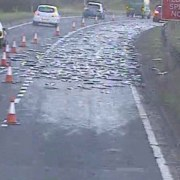 Delays during rush hour on Johnstone road after fish fell off the back of a van