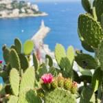 Location de bateau à Nice : Viens, on va voir la mer!