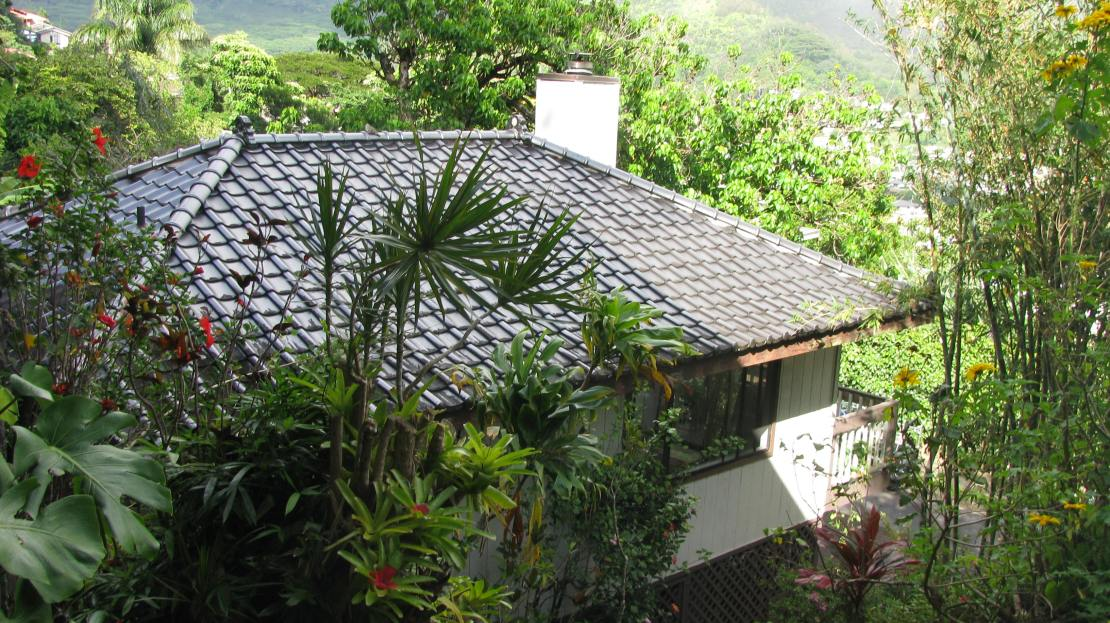 New Manoa Hillside