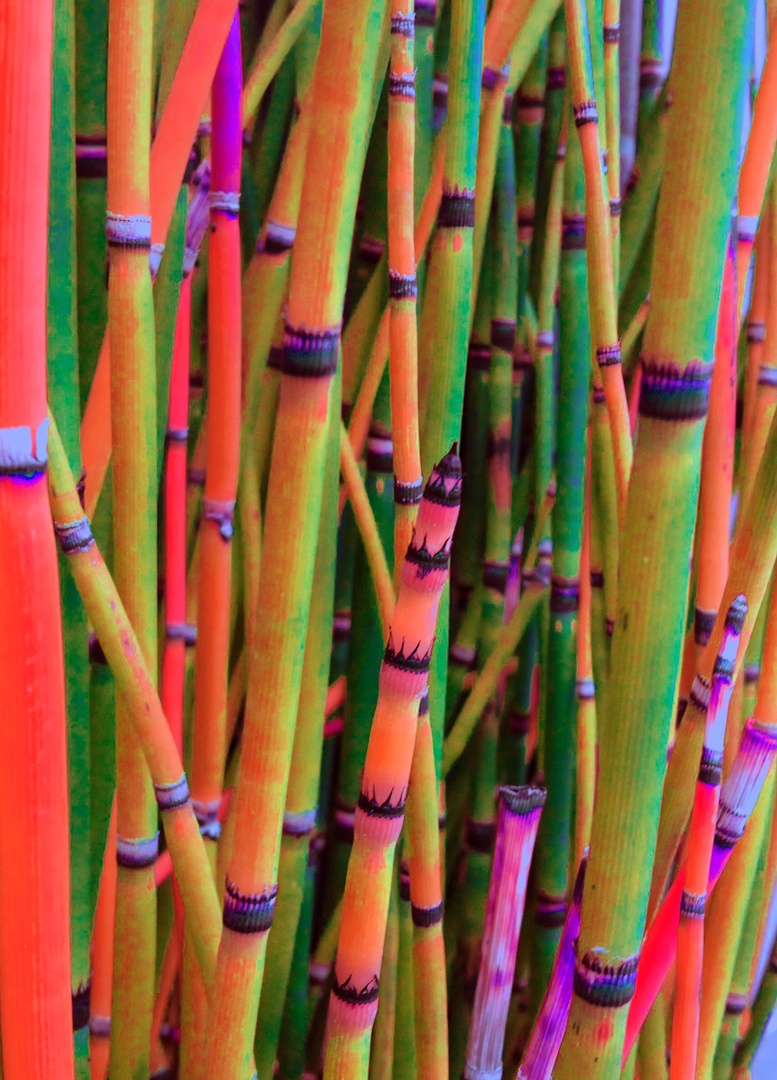 horsetails with color modified