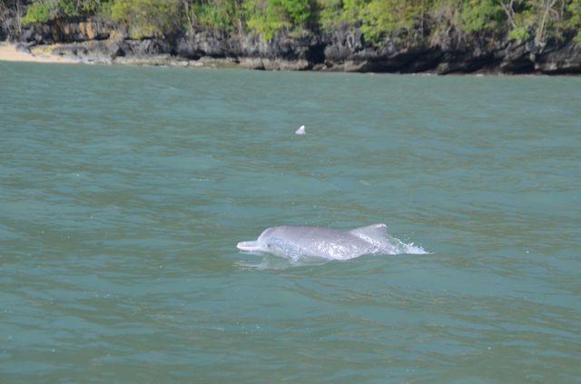 Langkawi - dauphins