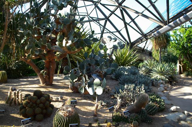 Yeomiji - cactus