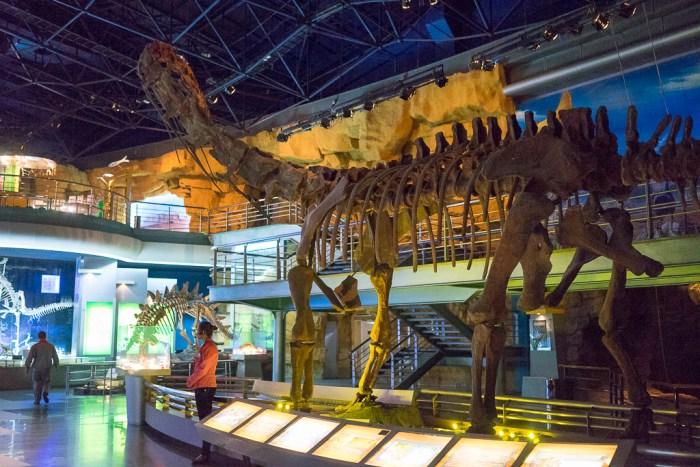 Dinosaur Land - fossile