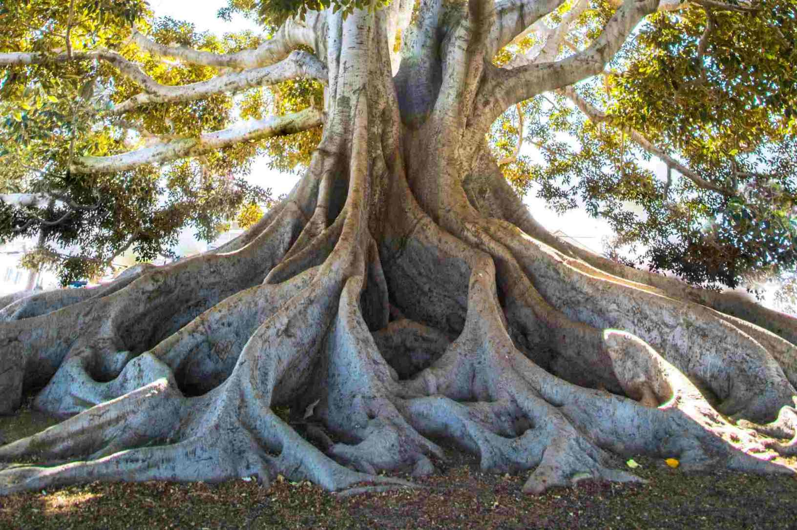 an image of tree roots