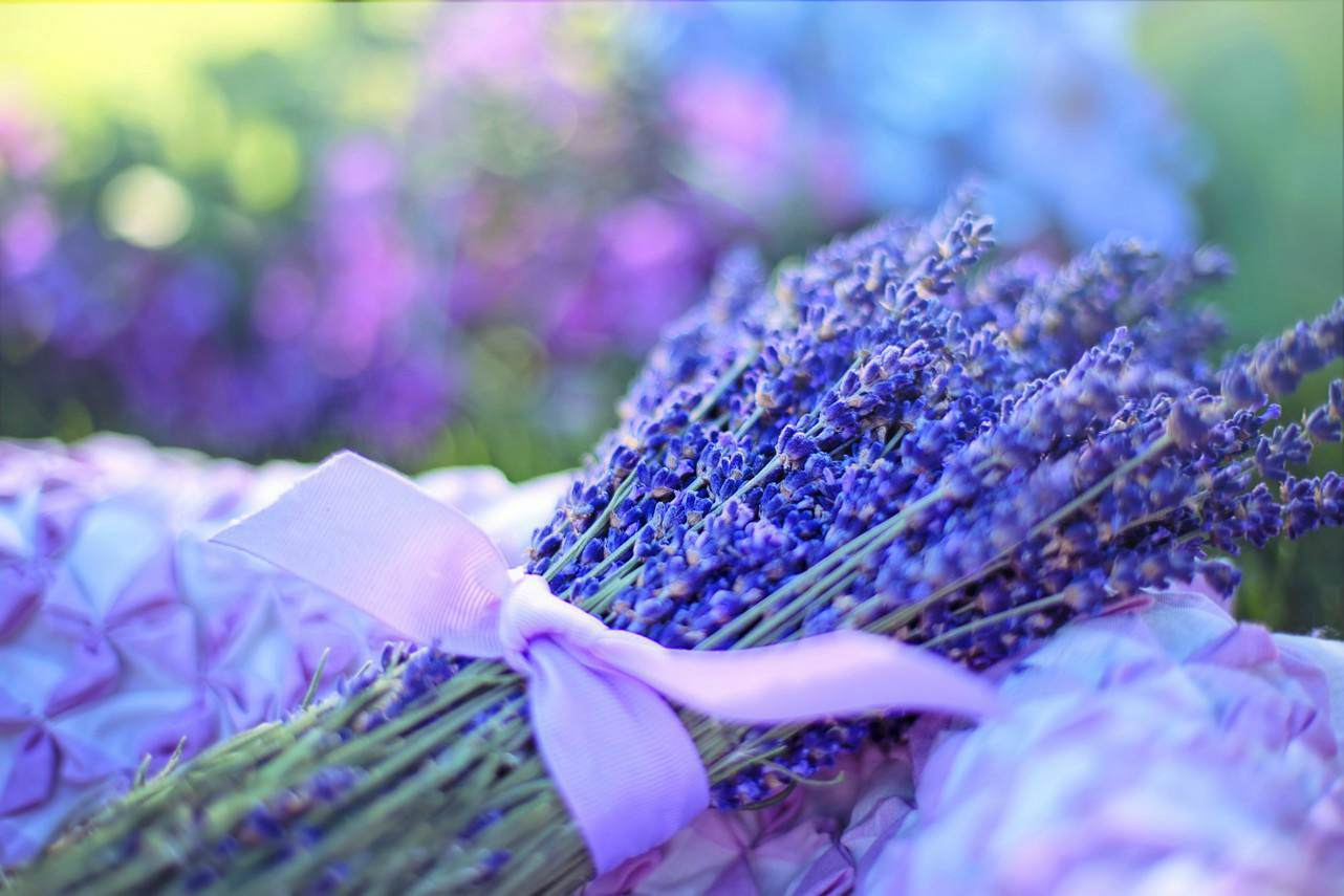 An image of a bunch of fresh lavender tied with a purple ribbon