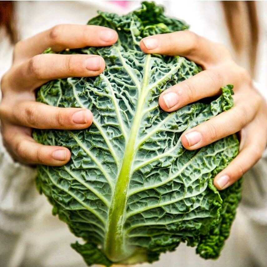 An image of a woman holding a raw green cabbage