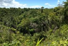Photo of DESTAQUE NACIONAL: Alagoas consegue zerar o desmatamento da Mata Atlântica