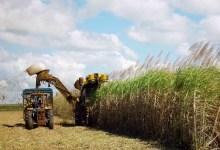 Photo of CANA-DE-AÇÚCAR: Estado pede ao governo federal medidas tributárias em apoio ao setor sucroenergético