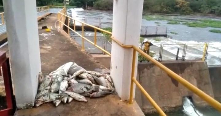 Vídeo viraliza e Polícia Ambiental aplica multa em Pirassununga