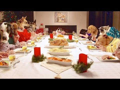Cani E Gatti A Tavola Per Natale Mangiano Con Mani Umane