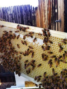 A frame filled with honey!