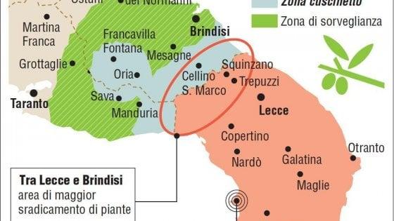 """Xylella, fuori dalla zona rossa Alberobello e Massafra. I sindaci del Salento: """"No agli insetticidi"""""""