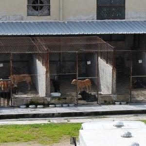 Canile rinviato lavvio dei lavori allinterno ci sono ancora 29 animali  Repubblicait