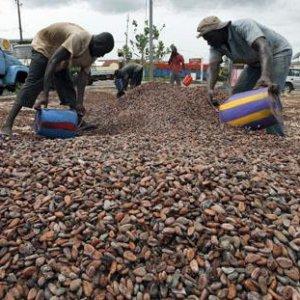 Nestlé, causa negli Usa per l'uso di manodopera minorile nelle piantagioni di cacao