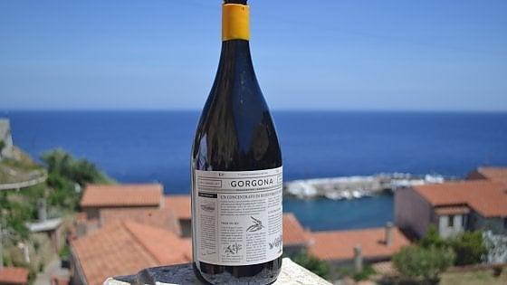 Da detenuti a viticoltori: Gorgona, il vino della libertà