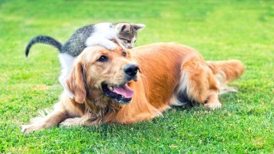 I Cani Sono Più Intelligenti Dei Gatti è La Conta Dei