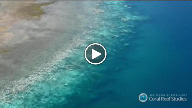 Australia la Grande Barriera corallina si sta sbiancando  Repubblica Tv  la Repubblicait