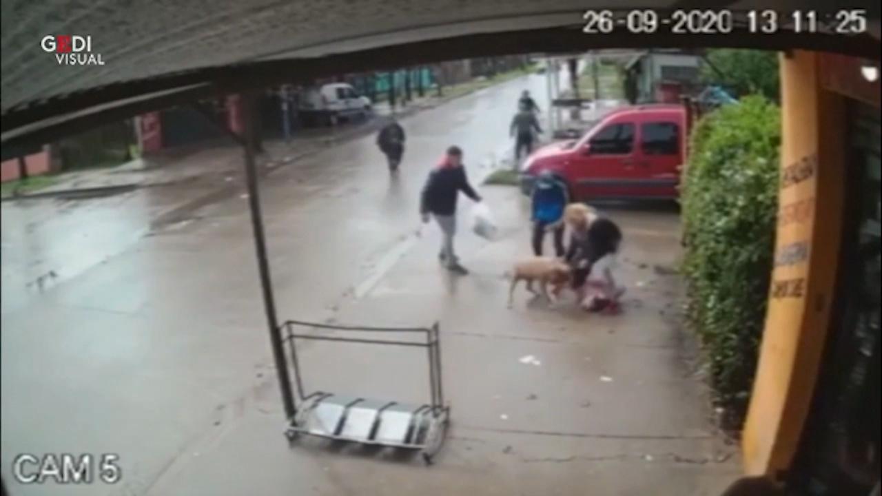 Buenos Aires, pitbull aggredisce una bambina: per staccarlo ci vogliono dieci persone