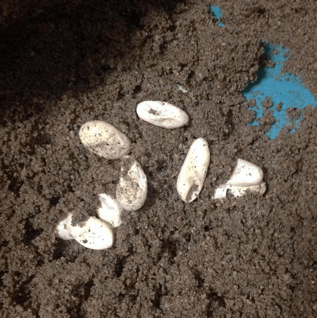 Egg Laying Reptifiles