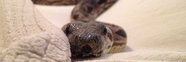 When is it Time to Rehome a Reptile?