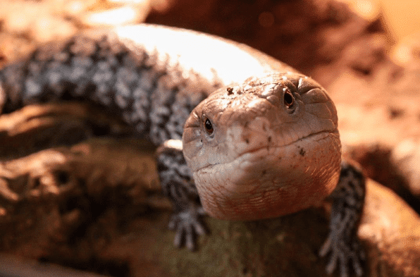 "On Reptile Adoption — a.k.a. ""Used"" Reptiles"