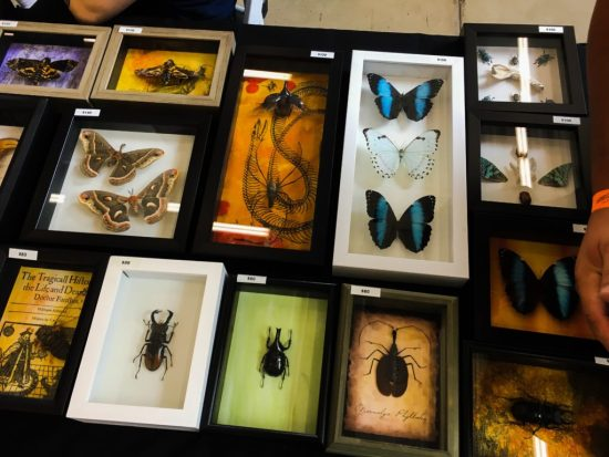 Framed invertebrates for sale at the Spring 2017 Wasatch Reptile Expo