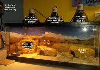 Leopard Gecko Terrarium Size & Lighting Requirements