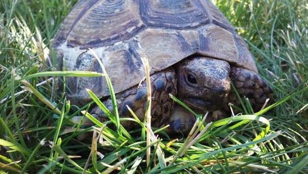 do turtles make good pets - land turtle and tortoise rescue