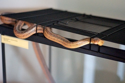 lost snake