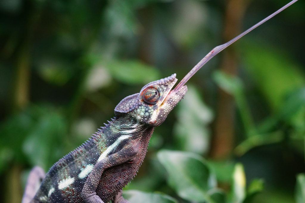 Feeder Insect Nutrition Facts for Reptile Keepers